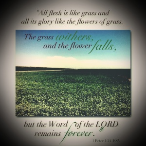 """All flesh is like grass and all its glory like the flowers of grass.  The grass withers, and the flower falls, but the Word of the LORD remains forever."" -1 Peter 1:24"