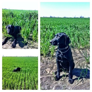 Enjoying ranch life and playing in the wheat fields.